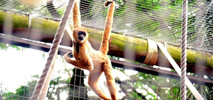 Macaco do Zoológico Quinzinho de Barros