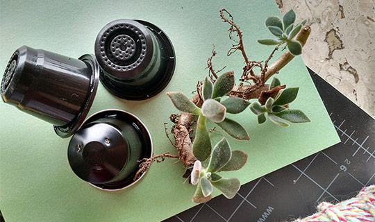 Imagem de cápsulas de café expresso e planta