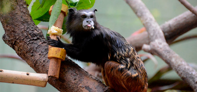 animais do zoológico municipal de Sorocaba