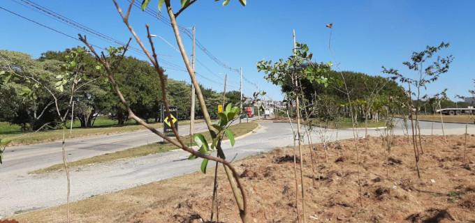 Plantio no Parque Porto das Aguas