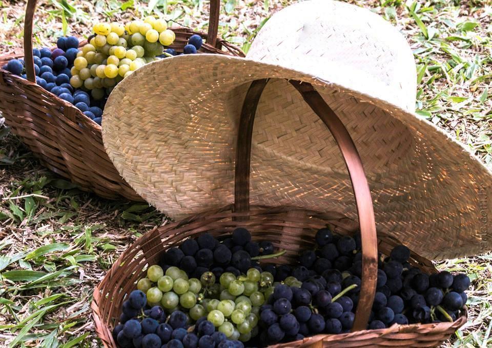 Chapeu e Uva