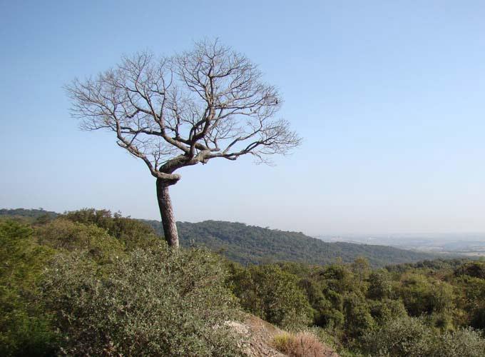 floresta ipanema